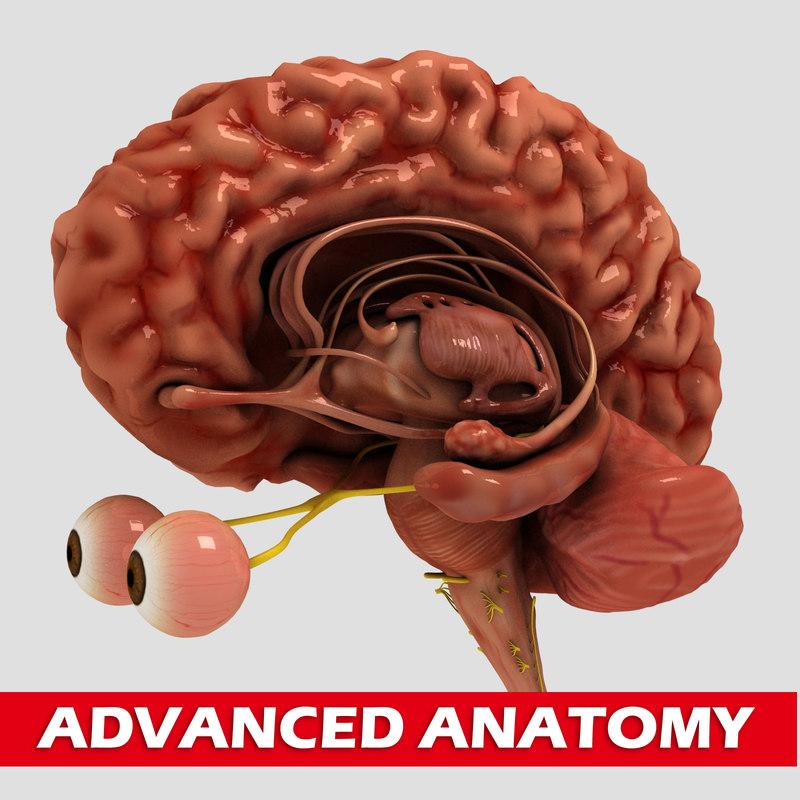 max brain medical nerves