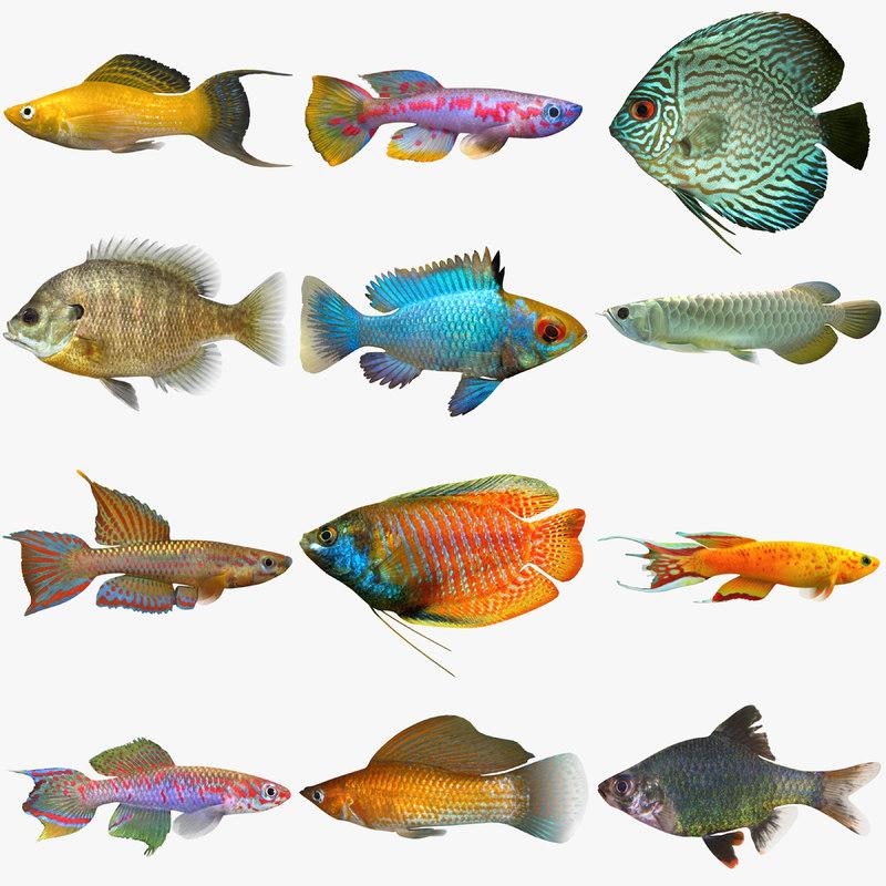 freshwater tropical fish 3d model