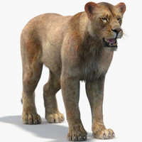 3d model lioness 2 fur lion