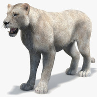 lioness 2 fur white max