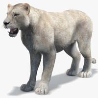 Lioness (2) (White, Fur)