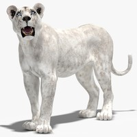 max lioness white rigged cat