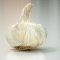 3d garlic food model