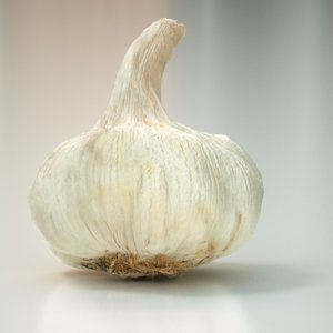 3d garlic food model