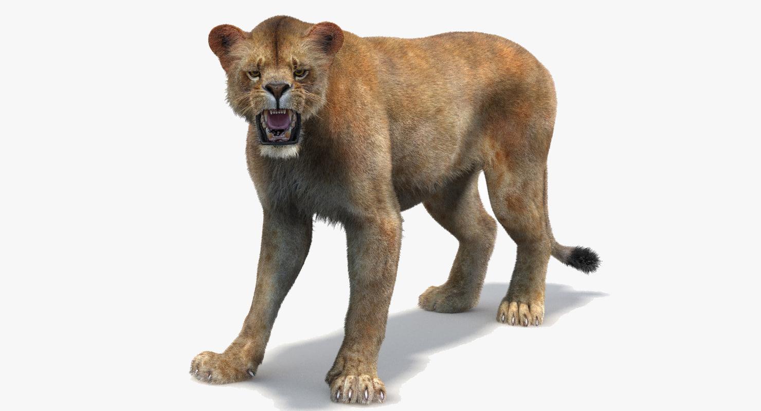3d lioness 2 rigged fur