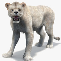 Lioness 2 (Rigged, Fur, White)