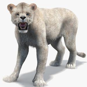 3d model lioness 2 rigged fur