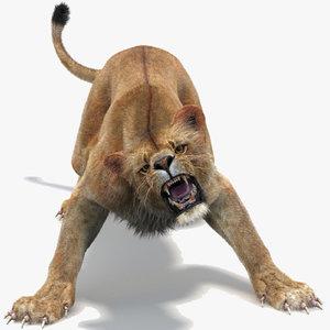 lioness 2 fur lion 3d model