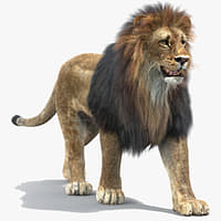 lion fur rigging animation 3d 3ds