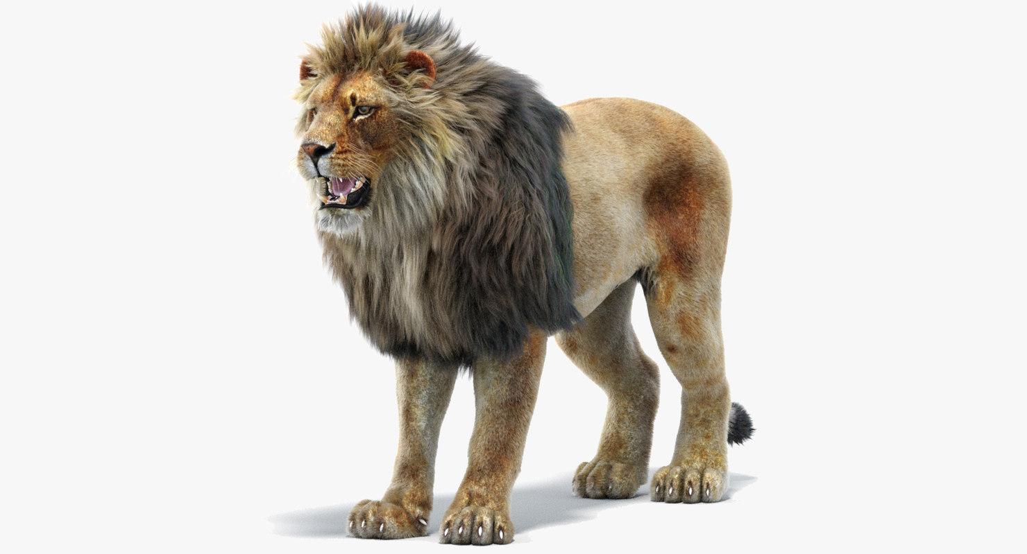 lion 2 fur 3d model