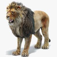 Lion 2 (Fur)