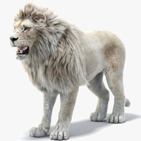 lion 2 fur white 3d x
