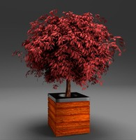 3ds red leaved potted tree