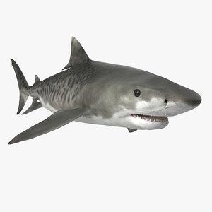 tiger shark rigged 3d max