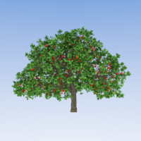 Apple Tree (2)