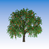 apple tree 3d model