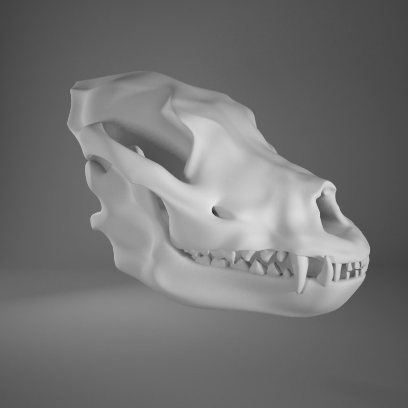 3d model of dog skull