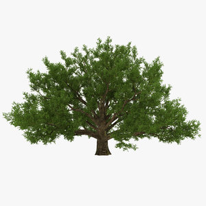 3d old white oak summer
