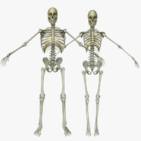 Male / Female Human Skeleton Combo