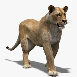 3d lioness lion rigging animation