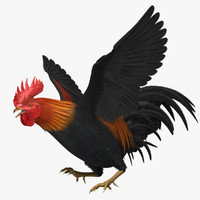 "Gallus Domesticus ""Brown-Red Domestic Rooster"