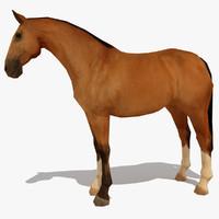 LowPoly Horse A (Buckskin)