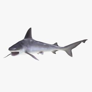 3d sandbar shark pose 2