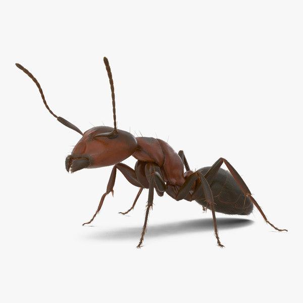 red ant fur pose 3d model