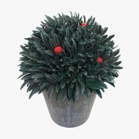 3d model plant pot