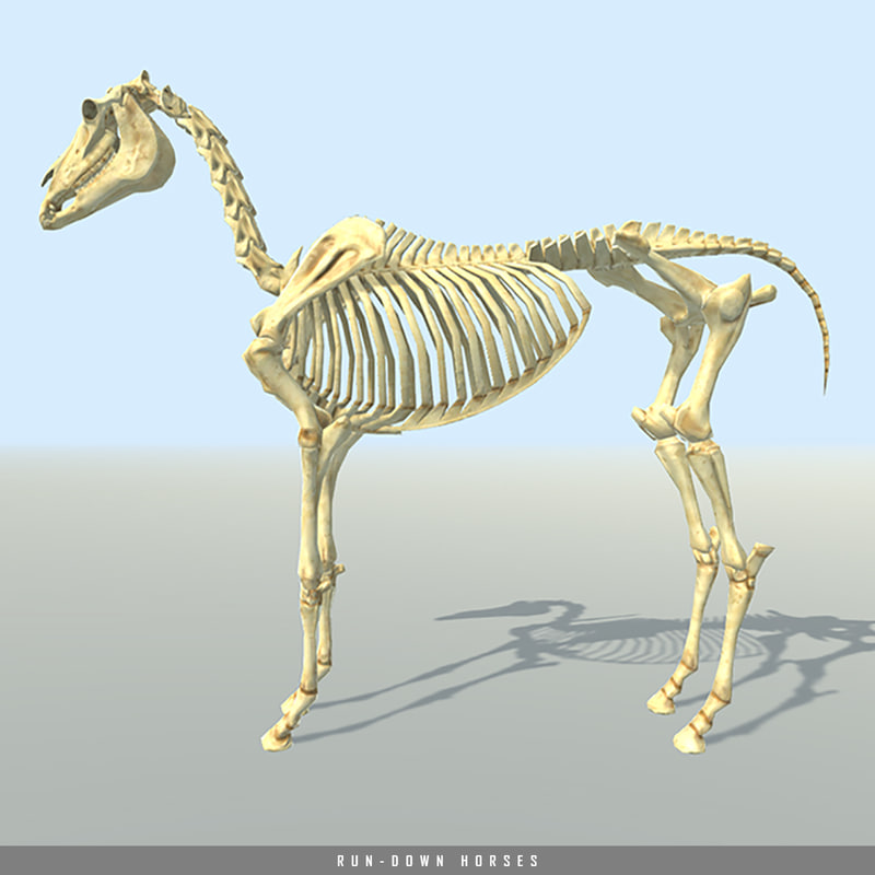 dead horse skeleton body bones 3d 3ds