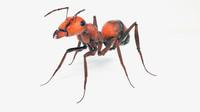 ant 3d model