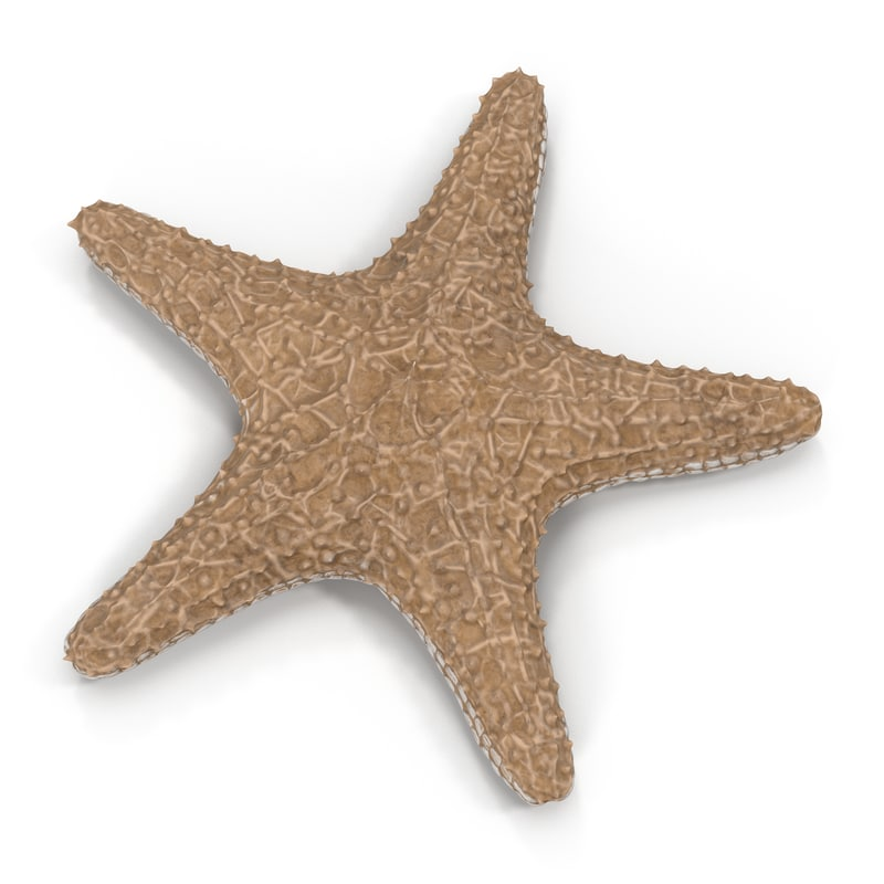 3d starfish star fish