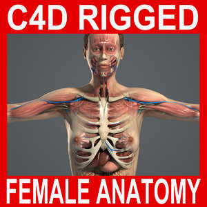 rigged complete female anatomy 3d c4d