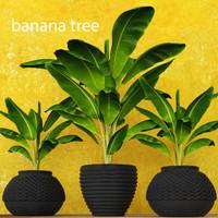 Banana Tree(1)