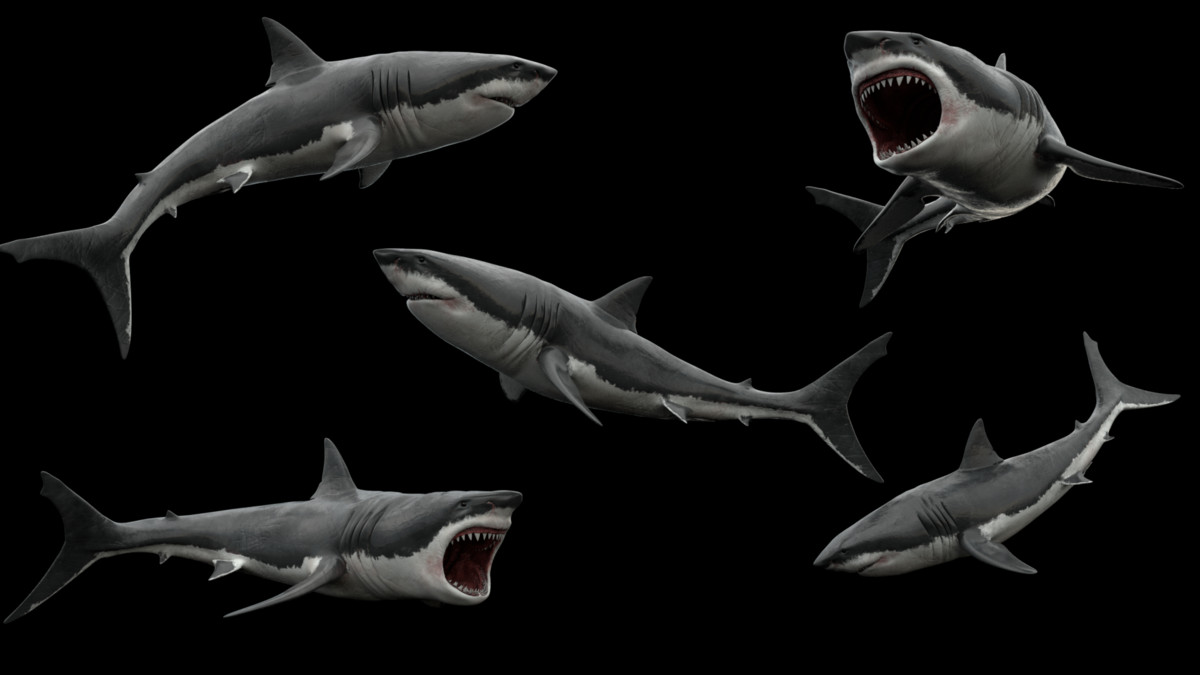 great white shark 3ds