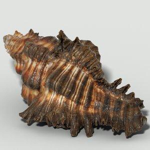 3d chicoreus banksii sea mollusk model