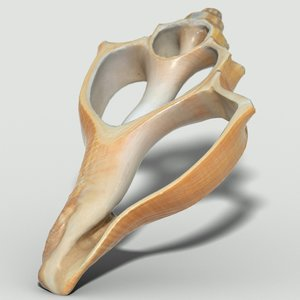 cut sea shell 3d obj