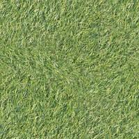 Grass [4K Tileable Texture]