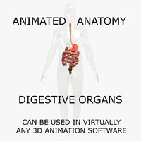 3D Anatomy Model Human: Animated Digestive Organs and Body