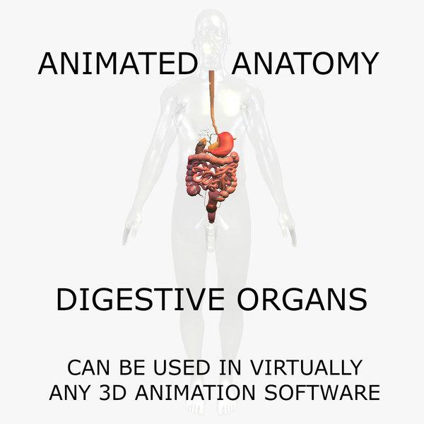 anatomy body digestive internal organs 3d model