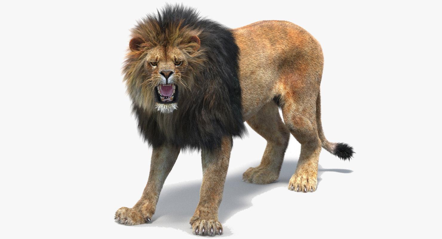 lion 2 fur rigged 3d obj