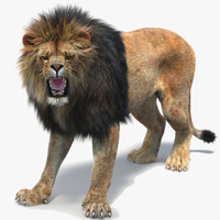 lion 2 fur rigged 3d obj
