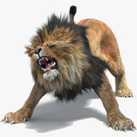 lion 2 fur cat 3d model