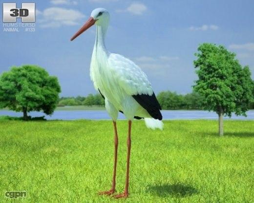 ciconia stork white 3d model