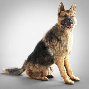 max german shepherd