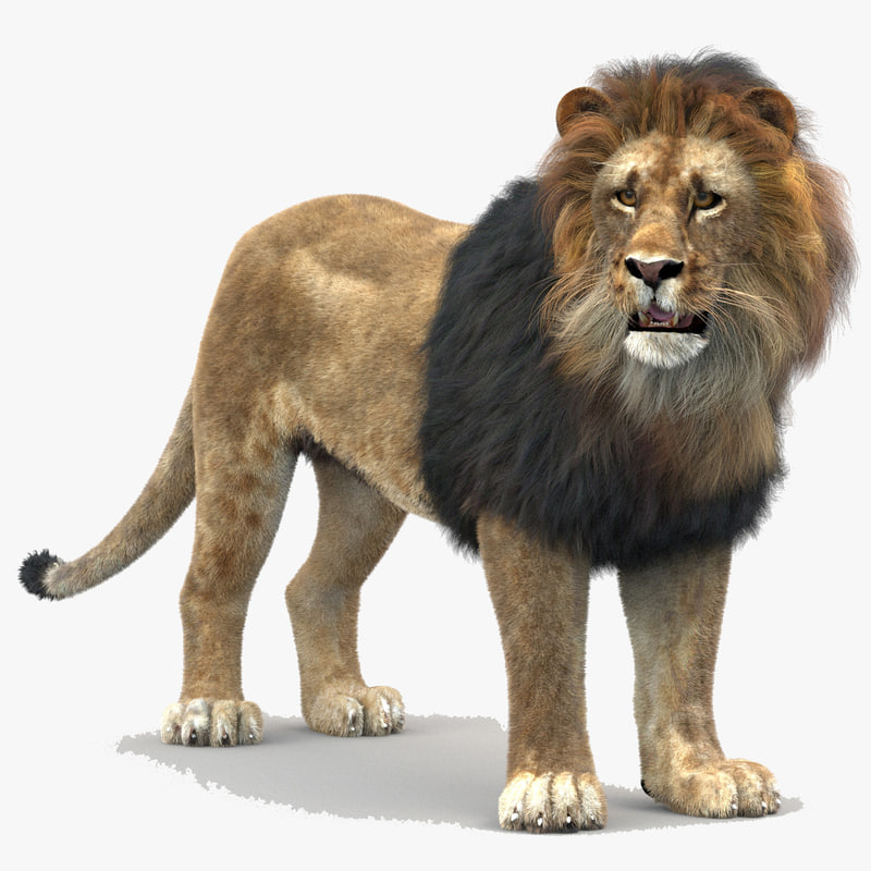 3d lion rigged fur cat model