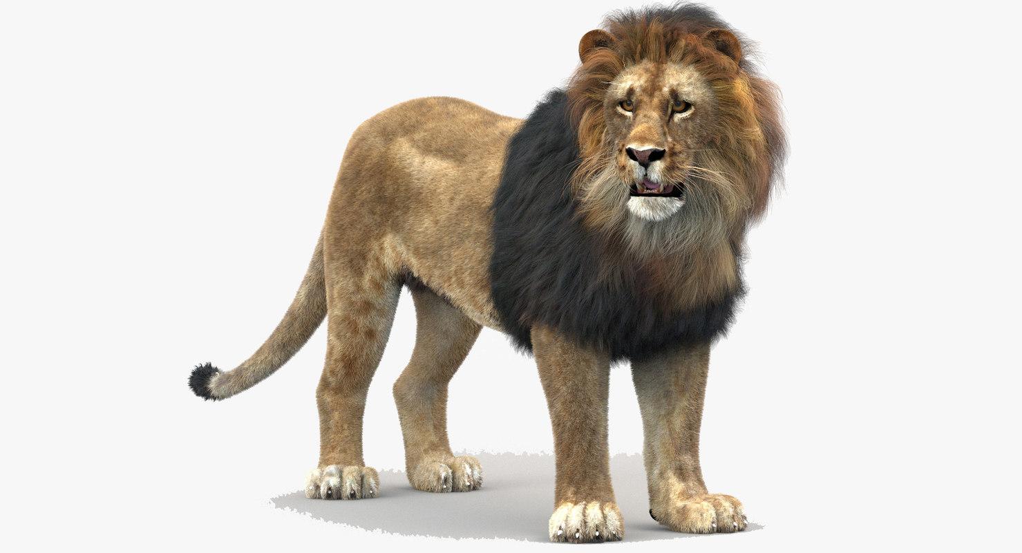 3d lion rigged fur cat model
