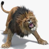 3d model lion 2 fur colors