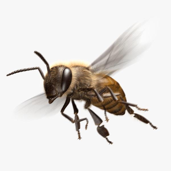 3D honey bee animation model