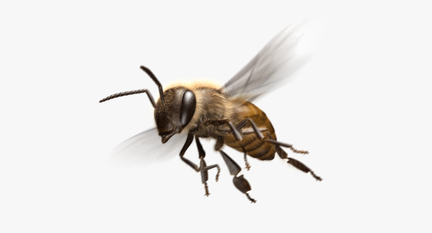 3D honey bee animation model